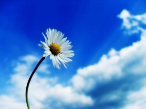 beautiful_sky_white_flower_50143-800x600
